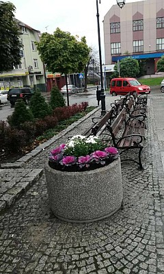 Kwietniki na Placu Kilińskiego (foto3)
