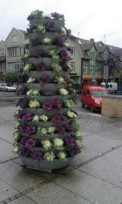Kwietniki na Placu Kilińskiego (foto4)