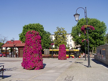 Kwietniki na pl. Kilińskiego (foto1)