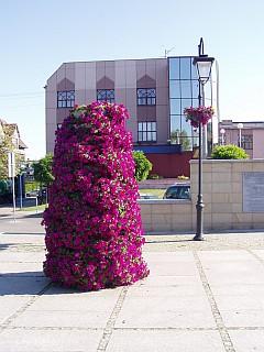 Kwietniki na pl. Kilińskiego (foto4)