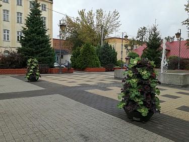 Kwietniki na Placu Kilińskiego obok fontanny (foto2)