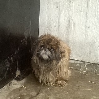 Pies znaleziony w dniu 09.02.2015r. na ul. Kolejowej w Zgierzu (foto1)